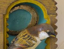 House Sparrow Santo Shrine I